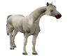 .m. Anim Horse