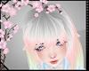 Bang Pastel Aileen †