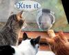 ~Oo Bird Tease Cats