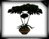 !S Potted Tree