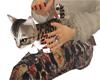 Bengal kitten lap