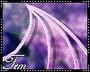 T » Dakki wings
