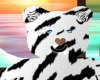 orso tiger pose foto