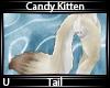 C. Kitten Tail