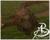 {AB} Swamp Gator