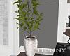 H. Modern White Plant