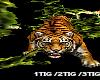 [LD] DJ Tiger Summon