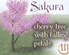 Cherry: falling petals