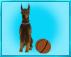 Doberman Dog Play