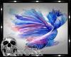 CS Blue Koi Fish Pic