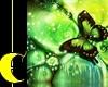 Green Butterfly Phtoshot