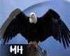[MH] Kara Kartal (flying