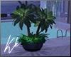 [kk] Potted Plant
