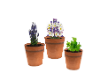 Potted Garden Plants