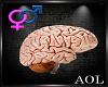 M/F  Unisex Brain