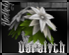 (D)Silver Poinsetta