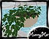 Texan Plant V1