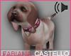 [FC] Cute Puppy
