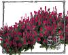 SB Pink Roses 2