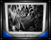 Leopard Pic