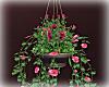 [Luv] Bdrm Hanging Plant
