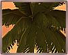 Palm Trees/Rocks