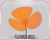 MLM Daisy Patch Orange