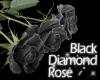 Black Diamond Rose Radio
