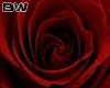 Rose Slow Dance