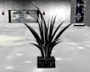 black white animat plant