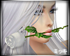 ! White Valentine Rose F