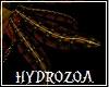 Hydrozoa Mollusk Wings