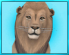 Jungle Lion Pet