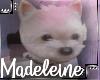 Maddie's Dog