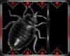 Drax bug 5