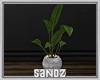 S. Plant Pot