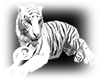 =S= White Tiger No pose