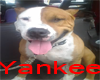 [BB] Yankee