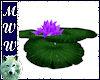 Floating Waterlily- Purp
