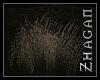 [Z] oracle gras V1