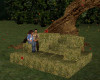 !Hay Stack Cuddle Poses