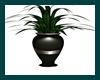 hunter green plant