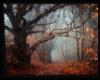Autumn Tree *