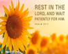 Easel - Rest In Him