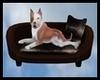 Animated Dog & Bed