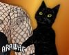 ak. kitty on arm