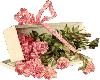 dozzen pink roses