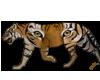 TigerinTiger