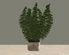 Art Plant //