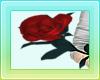 Haji ` Rose